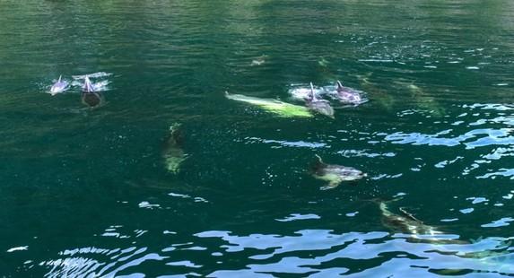 公园内的镜湖湖面不大但湖水平静清澈透明如镜